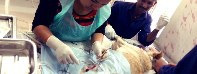 Grantee: Save Our Strays