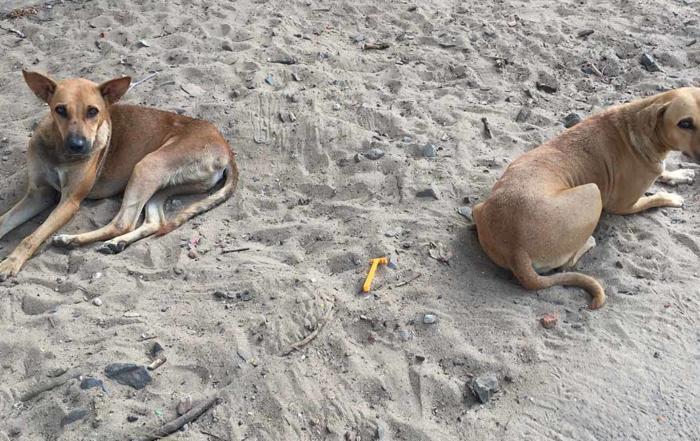 FIAPO Rabies-Free Kerala